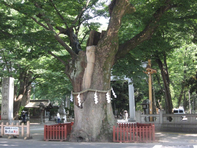 The 981 year old Master Tree at the Okunitama Shrine in Fuchu, Japan.