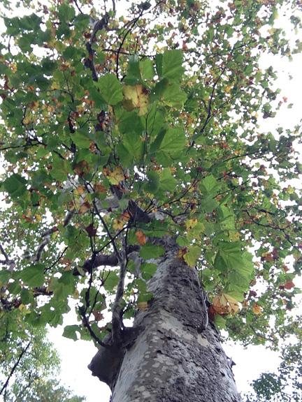 prayer tree2